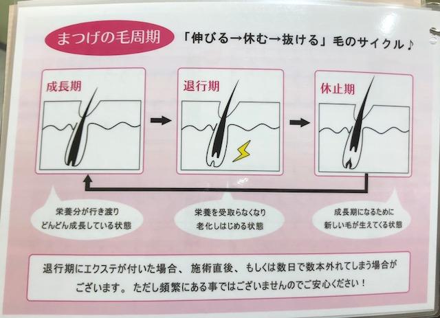 まつ毛の毛周期
